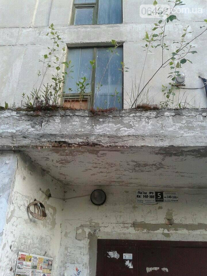 В Северодонецке тополя выросли прямо на доме (фото), фото-2