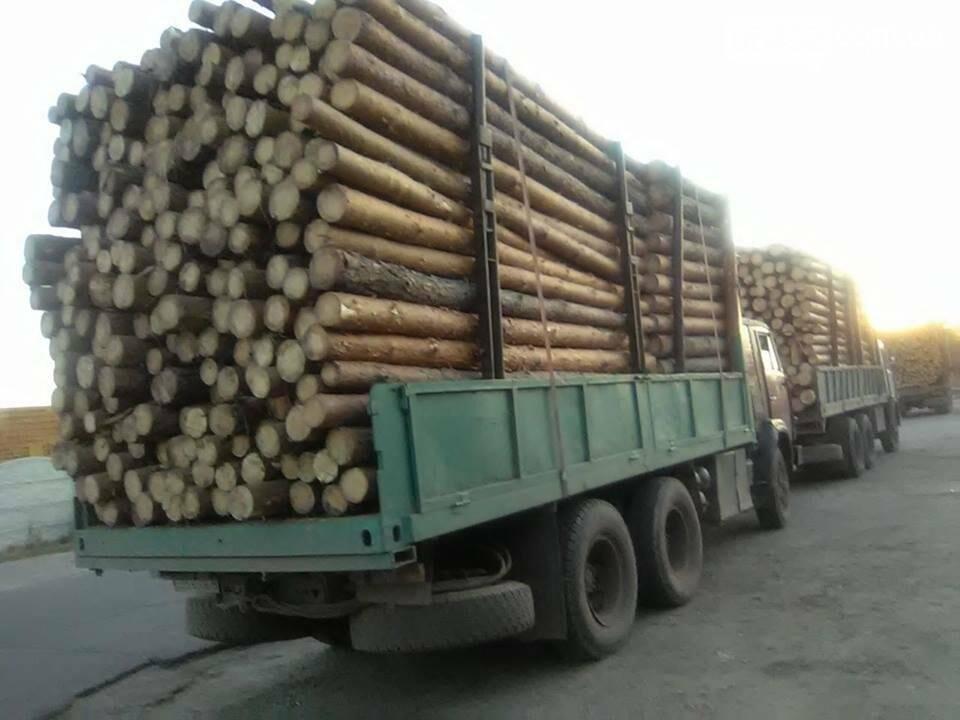 На Луганщине продолжается незаконная вырубка леса (фото), фото-1