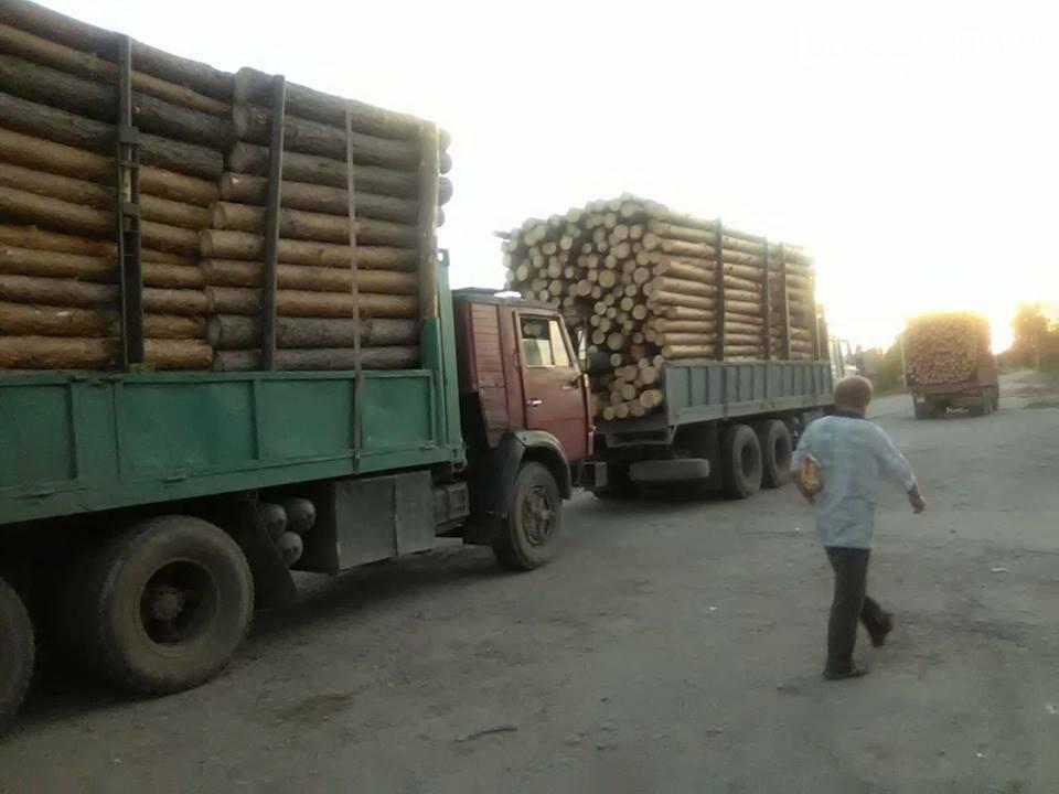 На Луганщине продолжается незаконная вырубка леса (фото), фото-2