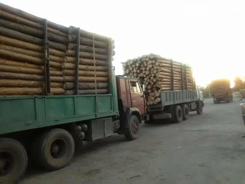 На Луганщине продолжается незаконная вырубка леса (фото), фото-3