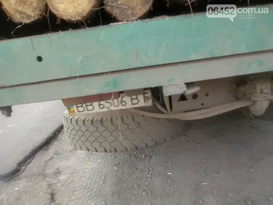 На Луганщине продолжается незаконная вырубка леса (фото), фото-7