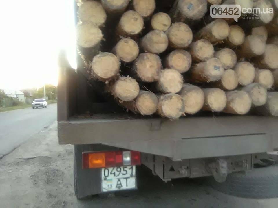 На Луганщине продолжается незаконная вырубка леса (фото), фото-5