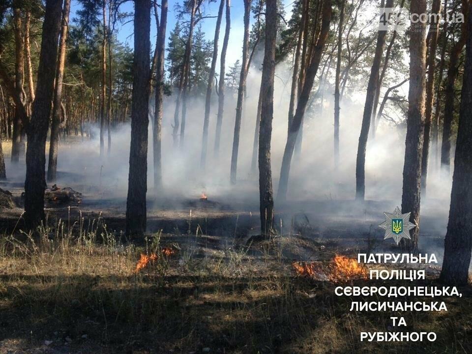 В Северодонецке горела лесополоса, фото-1