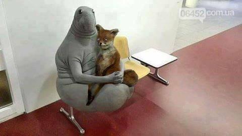 Ждун — самый милый мем 2017 года, фото-12