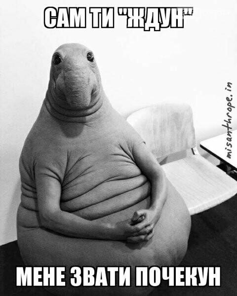 Ждун — самый милый мем 2017 года, фото-11