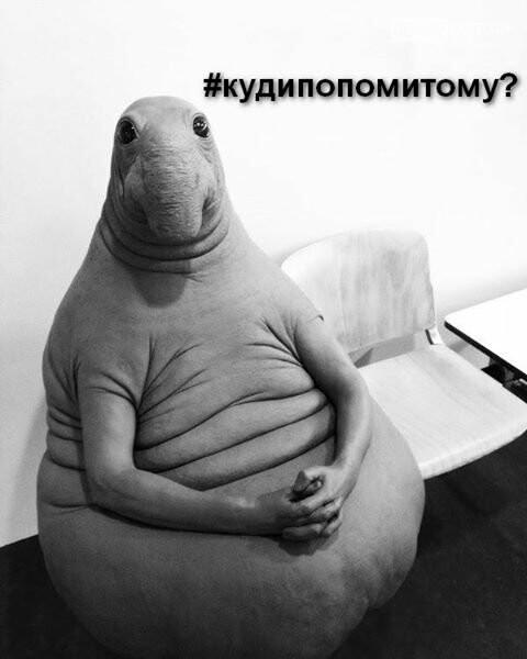 Ждун — самый милый мем 2017 года, фото-10