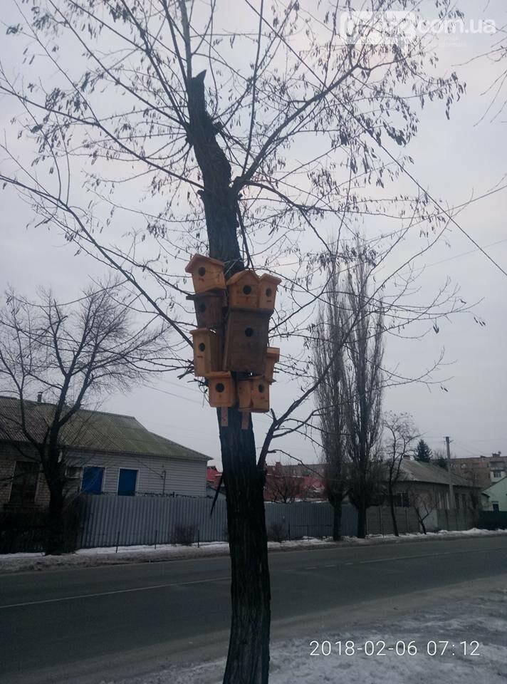 """В Северодонецке появился скворечник-""""многоэтажка"""" (фото), фото-2"""