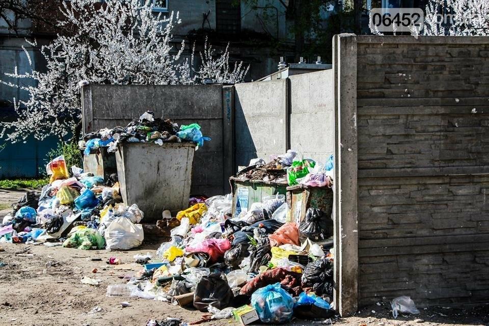 Северодонецк погряз в мусоре (фото), фото-7
