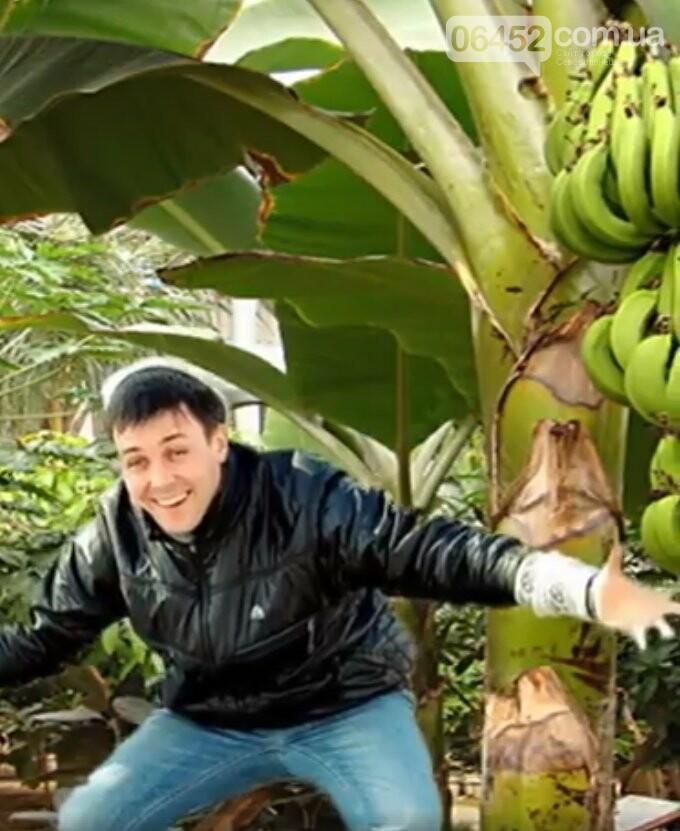 В Северодонецке выращивают экзотические фрукты, фото-4