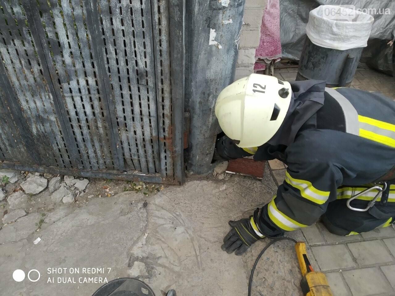 Северодонецкие спасатели освободили кота, застрявшего в трубе ворот, фото-2