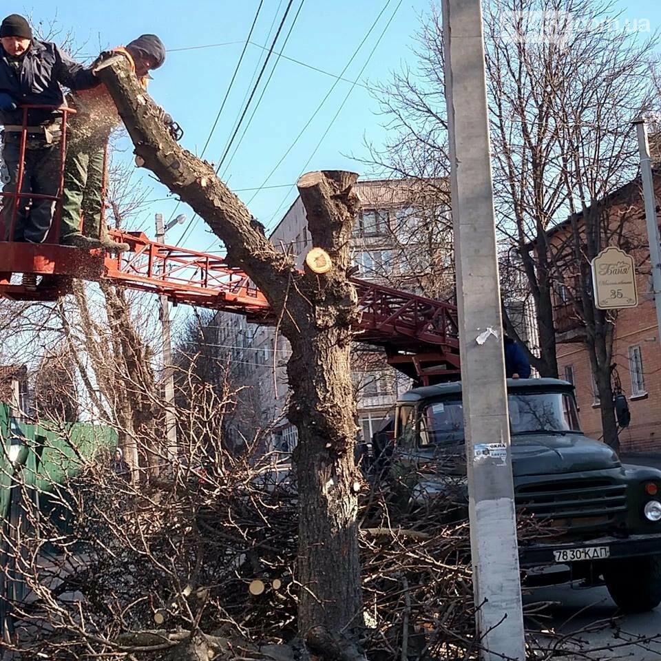 Сезон обрезанных крон в Северодонецке объявляется открытым: законно ли?, фото-3