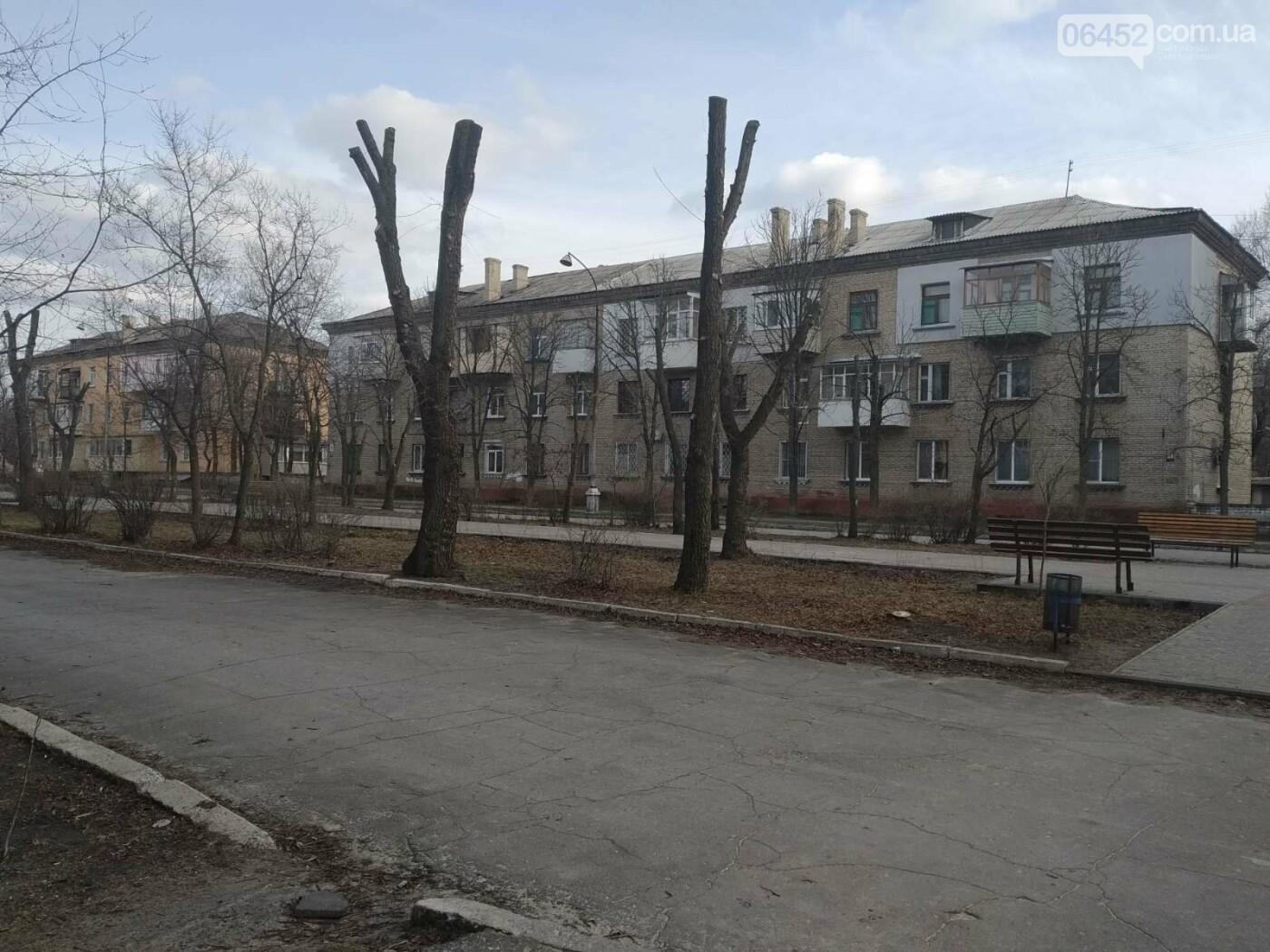 Сезон обрезанных крон в Северодонецке объявляется открытым: законно ли?, фото-2