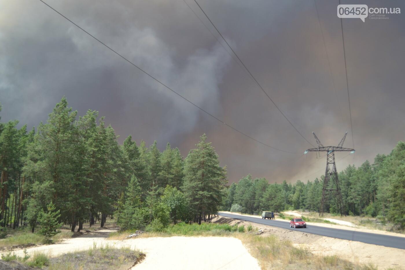 В Гослесагентстве оценили убытки от пожара на Луганщине в 5 миллиардов гривен, фото-3