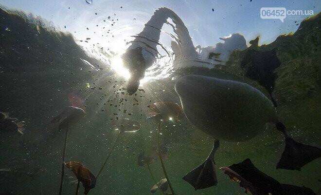 Накорми, но не навреди: чем можно угостить лебедей на Чистом озере?, фото-2