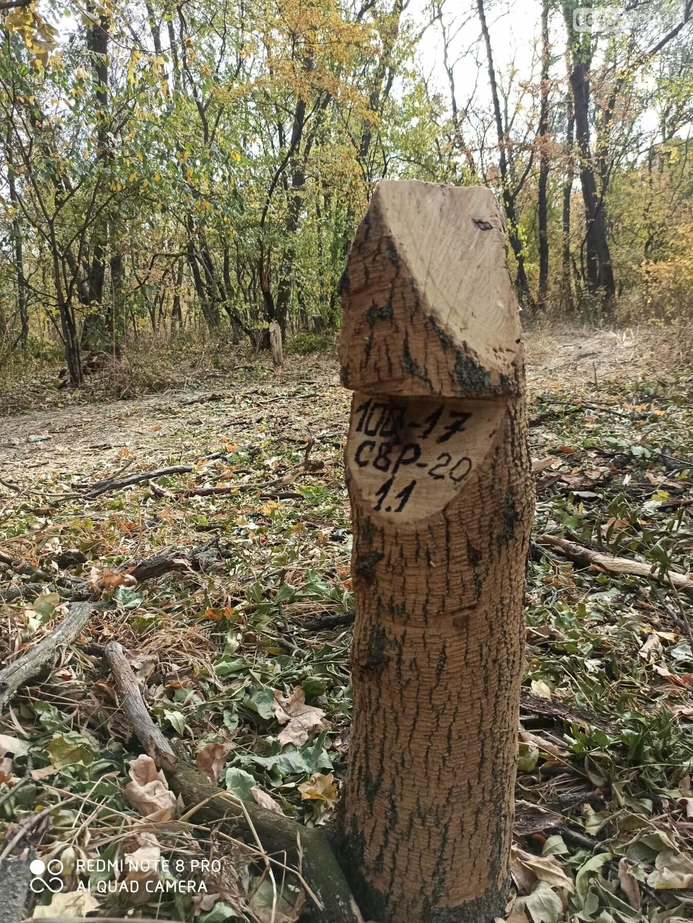 Под Северодонецком режут дубы. Как узнать законна ли вырубка? , фото-2