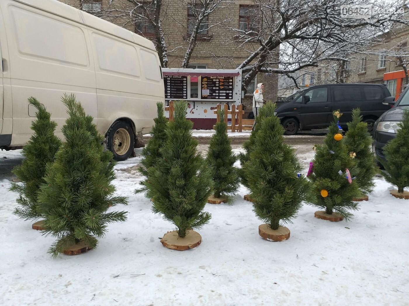 Елочные базары: где купить живую елку в Северодонецке?, фото-1