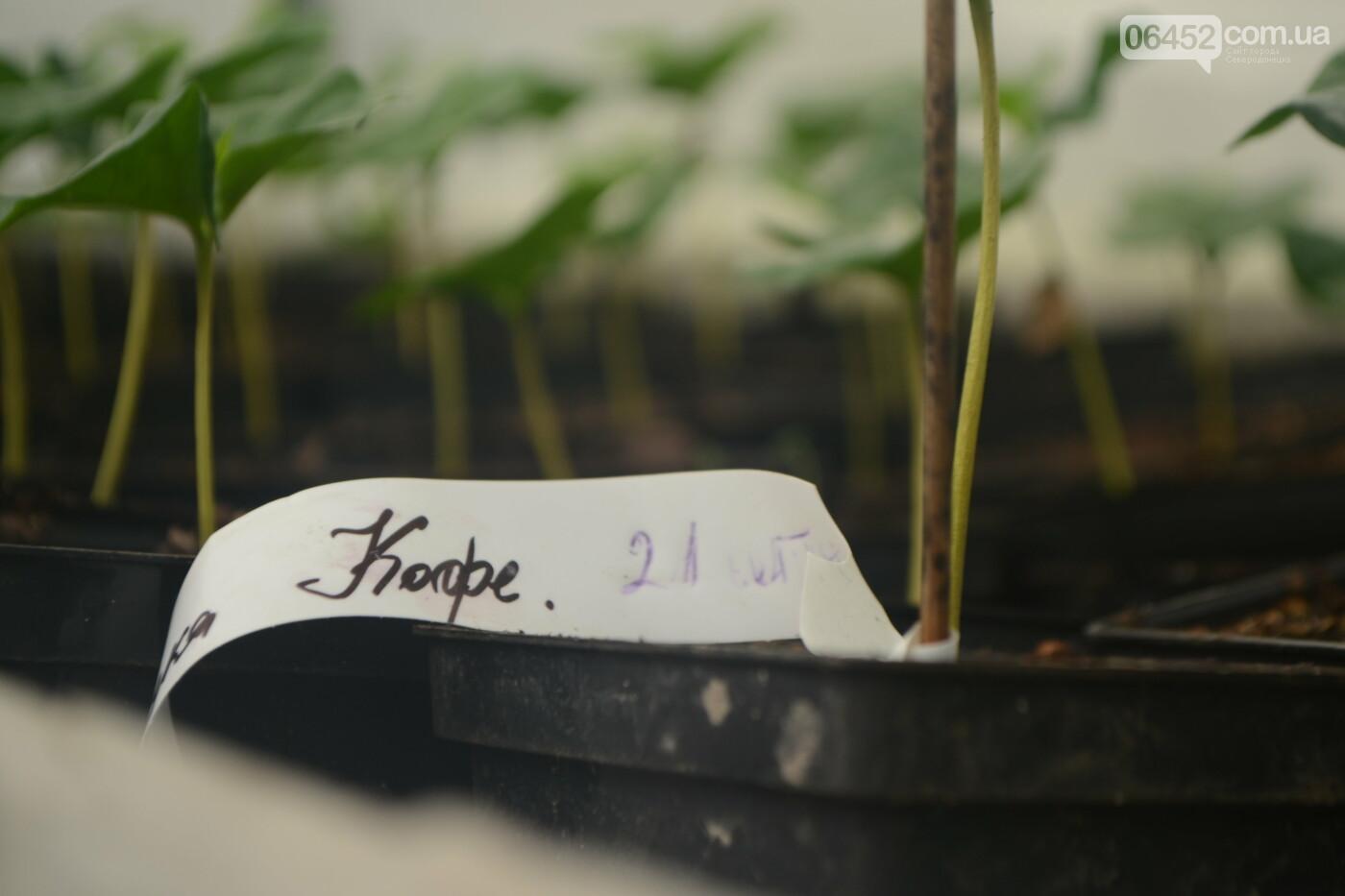 Тропики по-украински: как под Северодонецком выращивают экзотические фрукты (фото) , фото-1