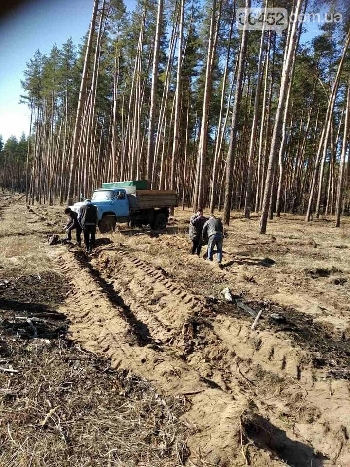 В Новоайдарском лесничестве высадят сосны и дубы, фото-1