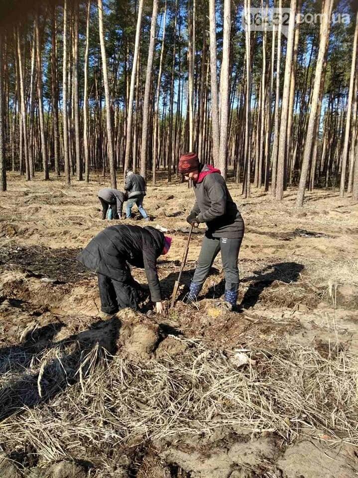 В Новоайдарском лесничестве высадят сосны и дубы, фото-2
