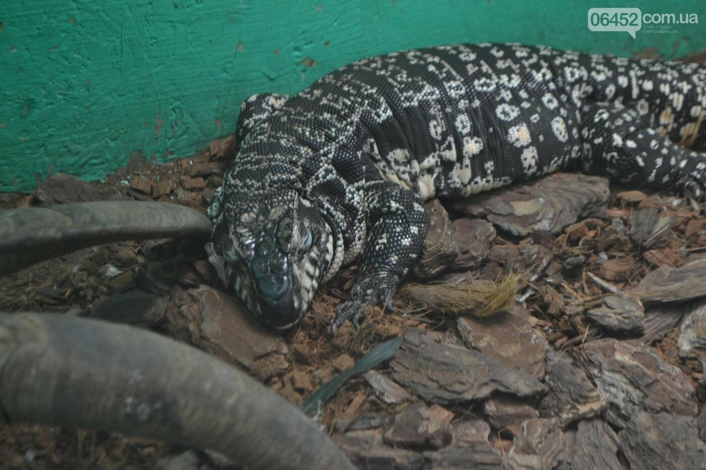 В Северодонецке открылась выставка экзотических рептилий (фото) , фото-6