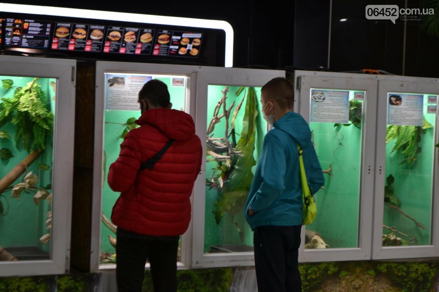 В Северодонецке открылась выставка экзотических рептилий (фото) , фото-2