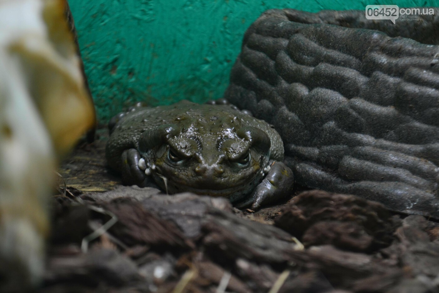 В Северодонецке открылась выставка экзотических рептилий (фото) , фото-5