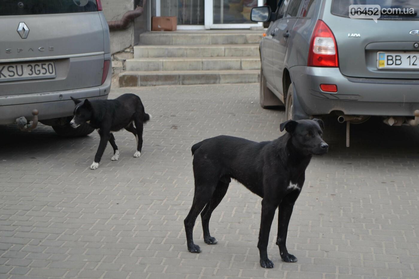 Бродячие собаки — реальная опасность Северодонецка , фото-1
