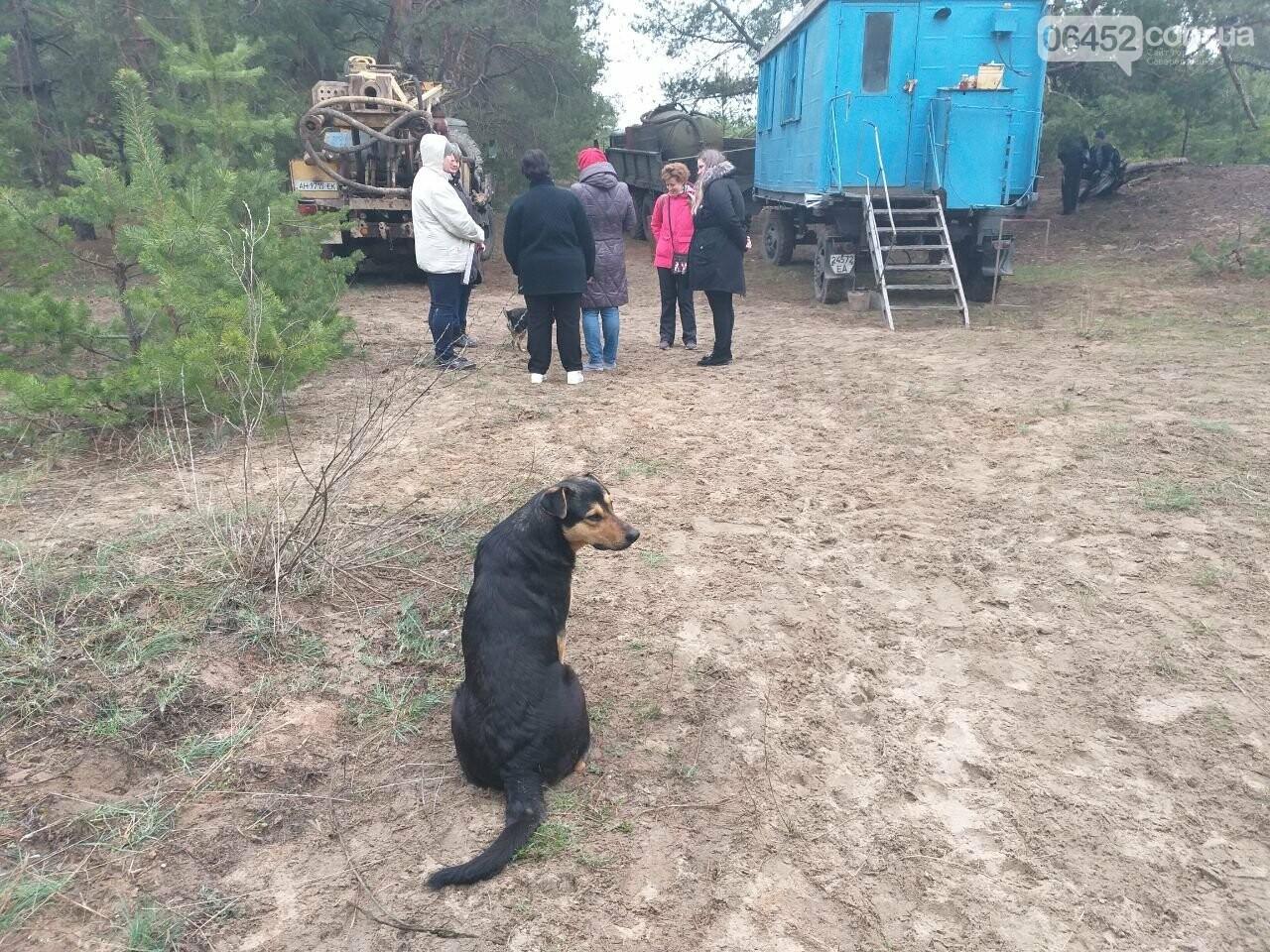 Бродячие собаки — реальная опасность Северодонецка , фото-4