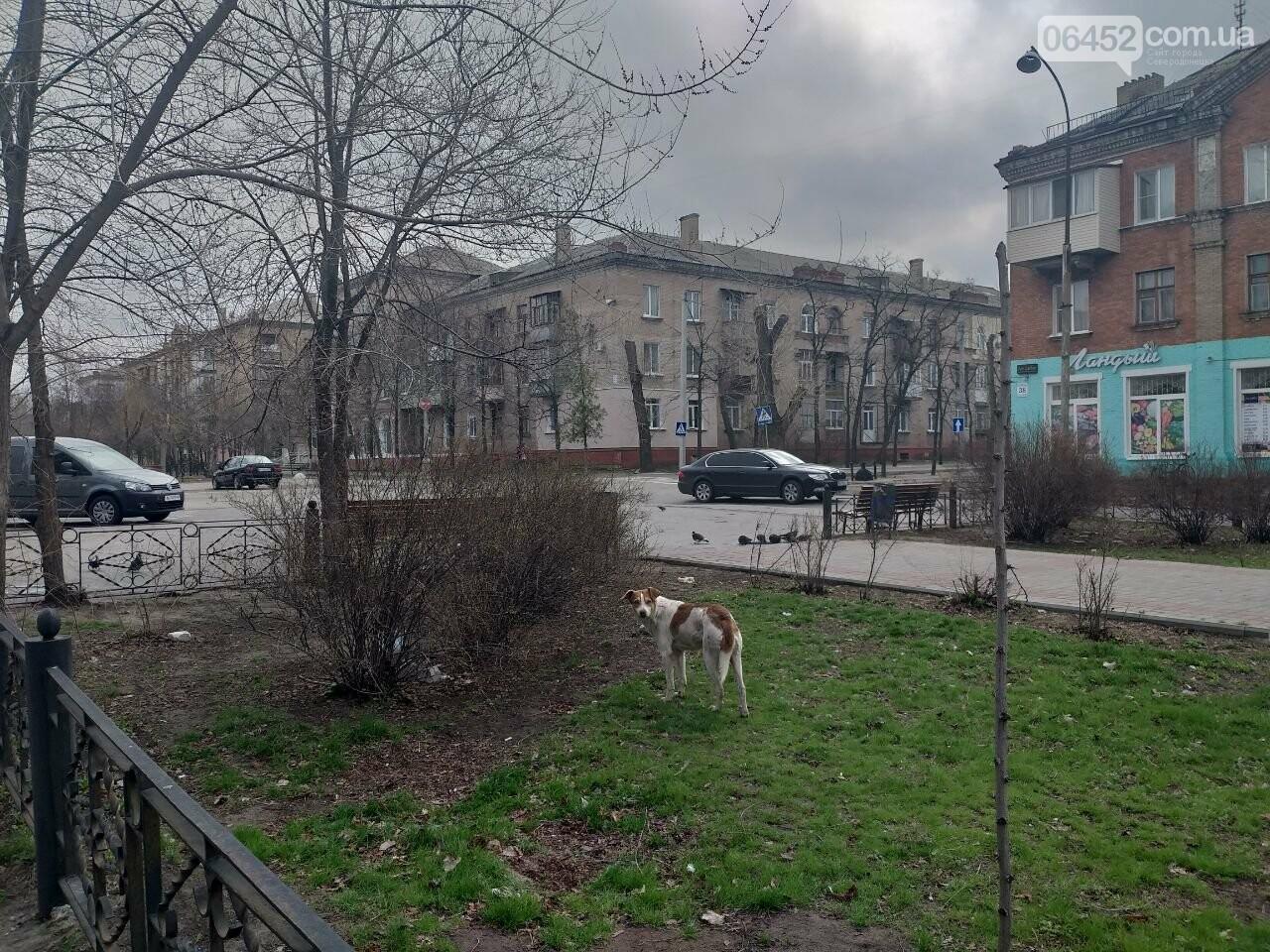 Бродячие собаки — реальная опасность Северодонецка , фото-2