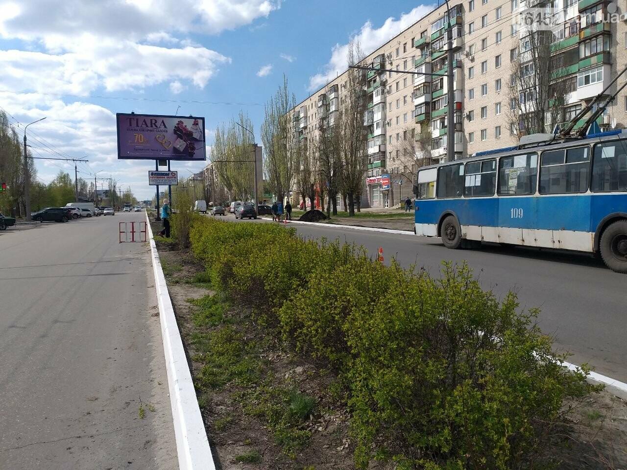 В Северодонецке озеленяют Гвардейский проспект (фото) , фото-1