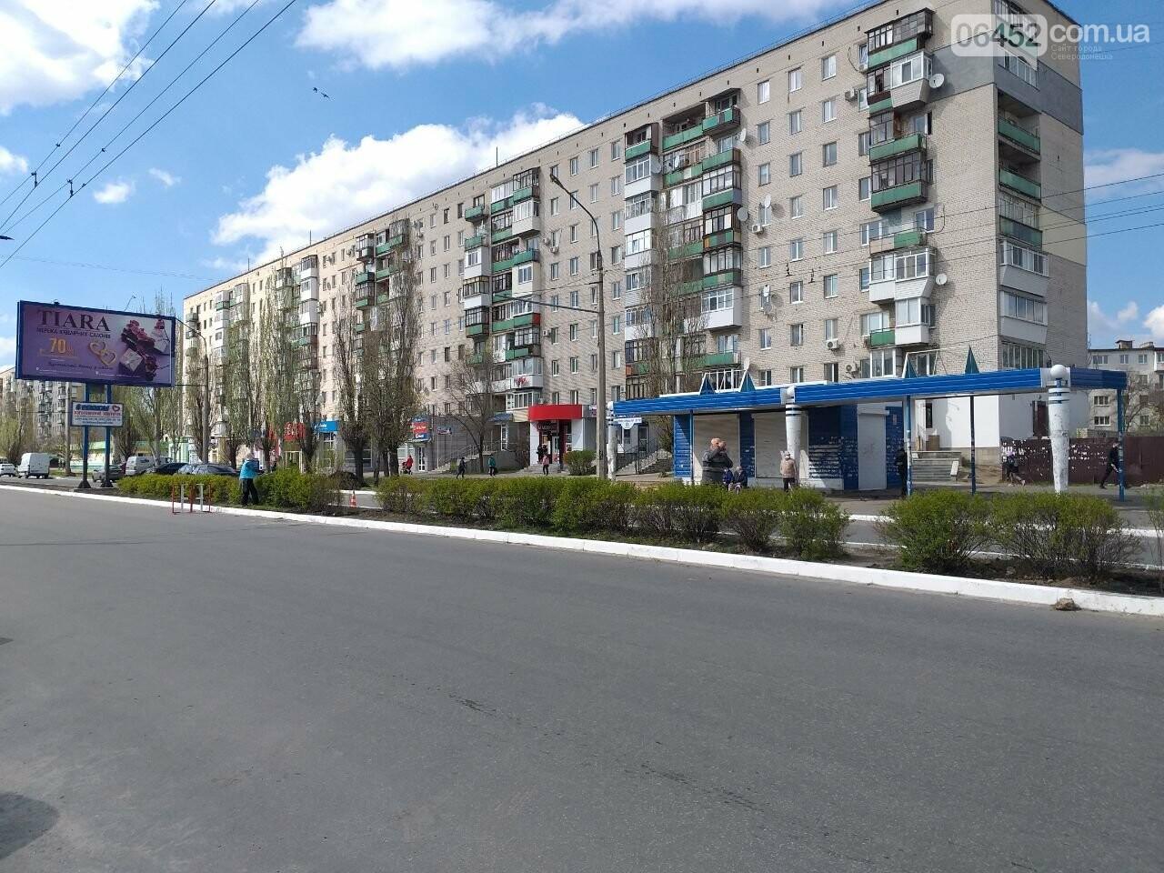 В Северодонецке озеленяют Гвардейский проспект (фото) , фото-3