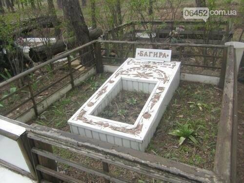 Собаке - собачьи похороны: как в Северодонецке хоронят домашних животных , фото-11