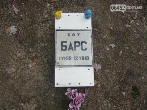 Собаке - собачьи похороны: как в Северодонецке хоронят домашних животных , фото-30