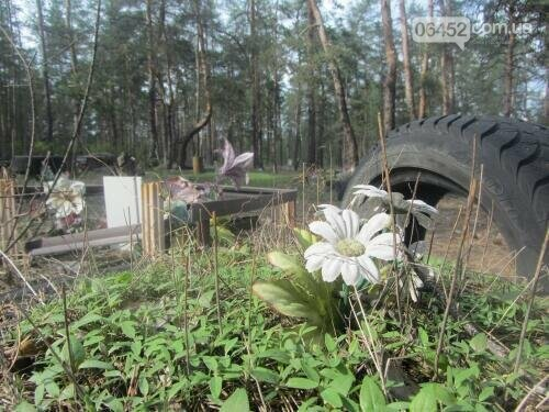 Собаке - собачьи похороны: как в Северодонецке хоронят домашних животных , фото-33