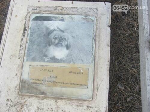 Собаке - собачьи похороны: как в Северодонецке хоронят домашних животных , фото-45