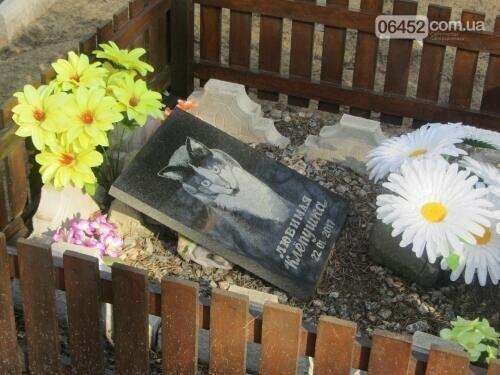 Собаке - собачьи похороны: как в Северодонецке хоронят домашних животных , фото-61