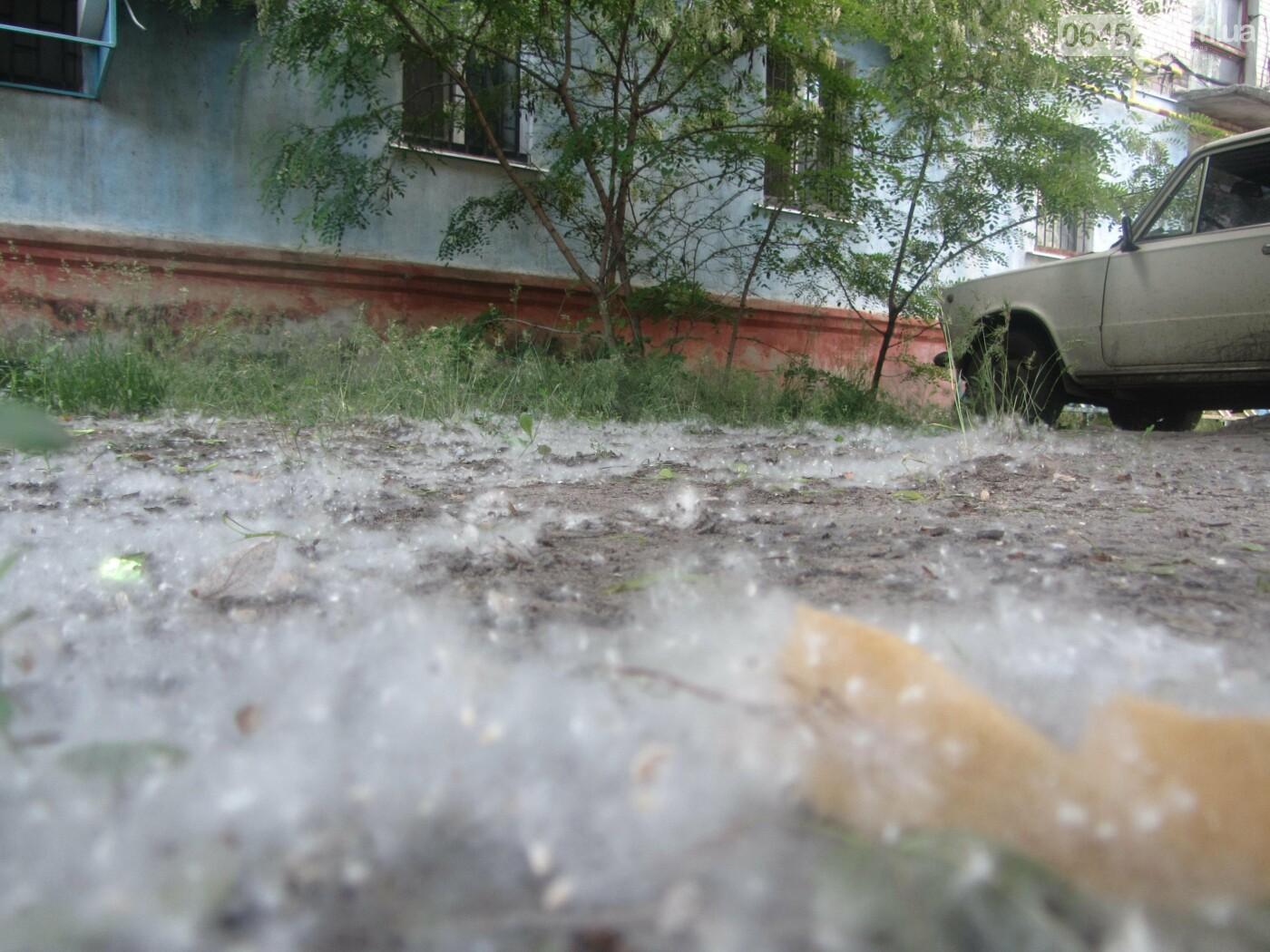 Сезон тополиного пуха в Северодонецке: страдают люди, автомобили и кондиционеры, фото-7