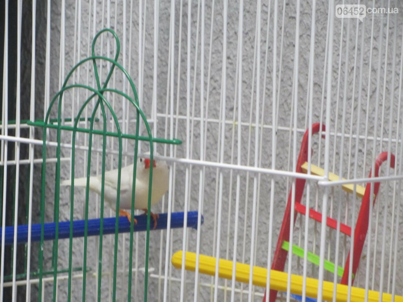 """Птица Амадин, """"Кот и Пёс"""""""