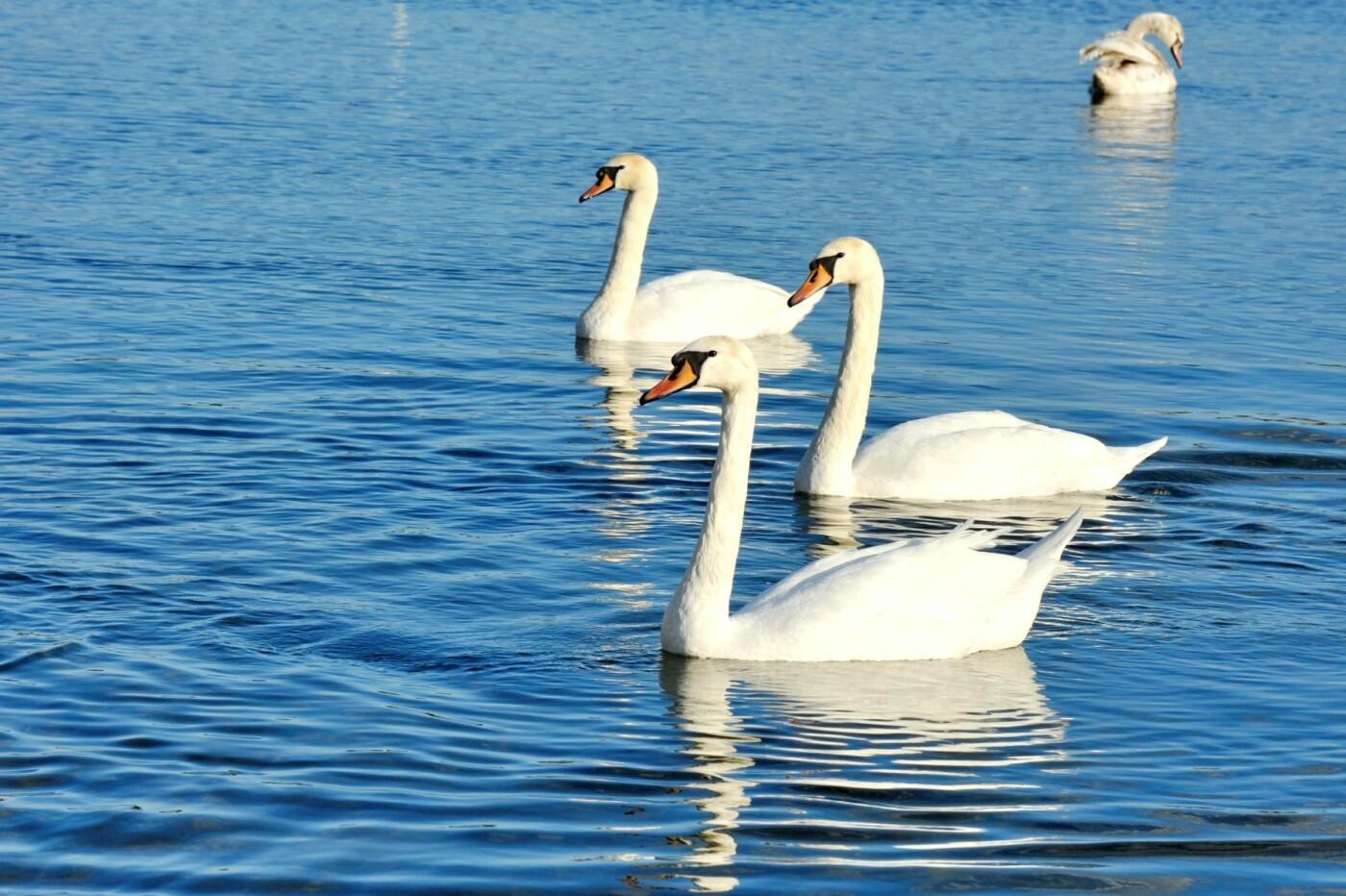 Озеро Чистое: интересные факты о городском водоеме, фото-5