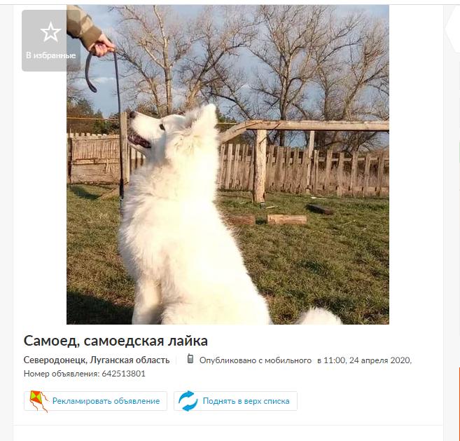 Домашние животные в Северодонецке :  самые дорогие и бюджетные предложения, фото-2
