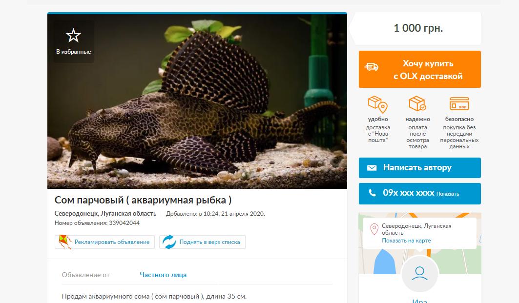 Домашние животные в Северодонецке :  самые дорогие и бюджетные предложения, фото-5