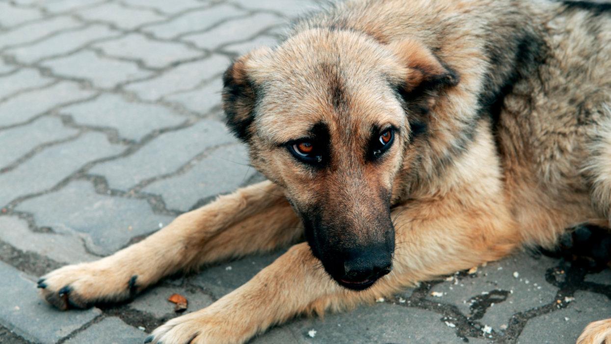 Как помочь бездомным животным в Северодонецке?, фото-2