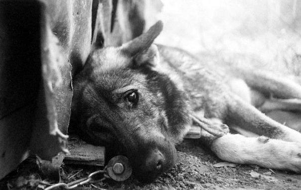 Как помочь бездомным животным в Северодонецке?, фото-8