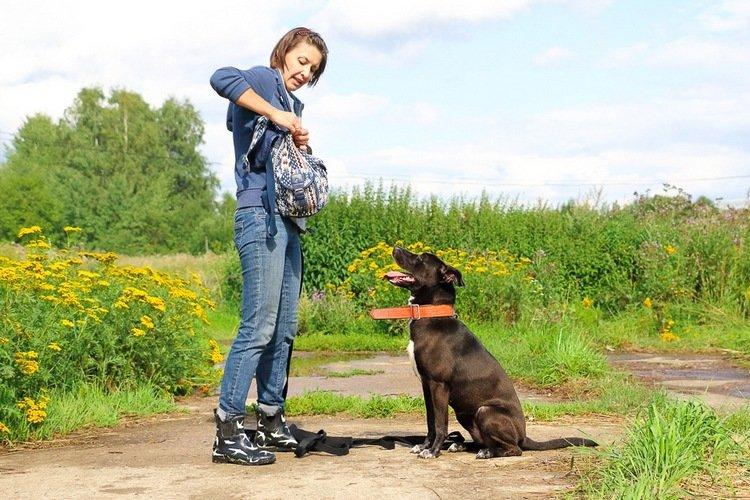 Как помочь бездомным животным в Северодонецке?, фото-5