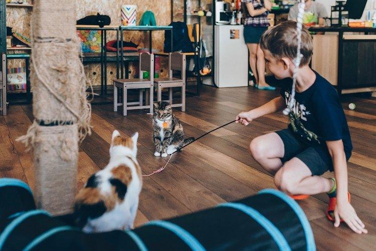 Как помочь бездомным животным в Северодонецке?, фото-6