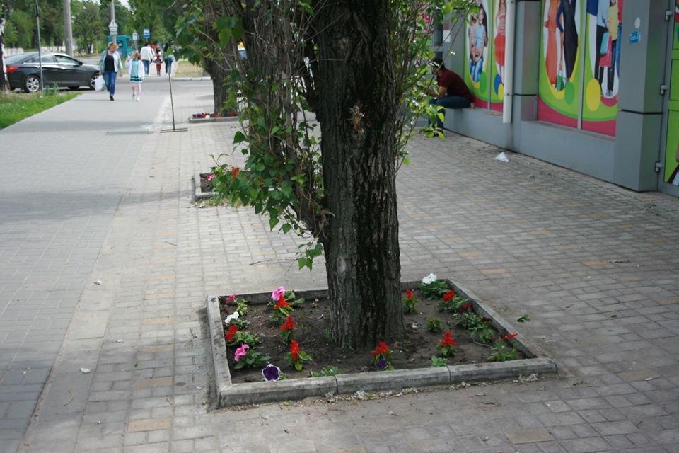Европейский Северодонецк: в центре города высадили яркие цветы , фото-2