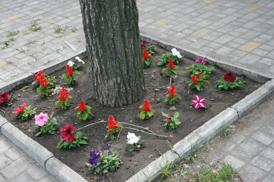 Европейский Северодонецк: в центре города высадили яркие цветы , фото-1