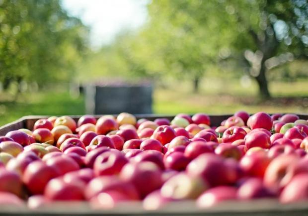 Приметы и традиции на Яблочный Спас: что нельзя делать, фото-1