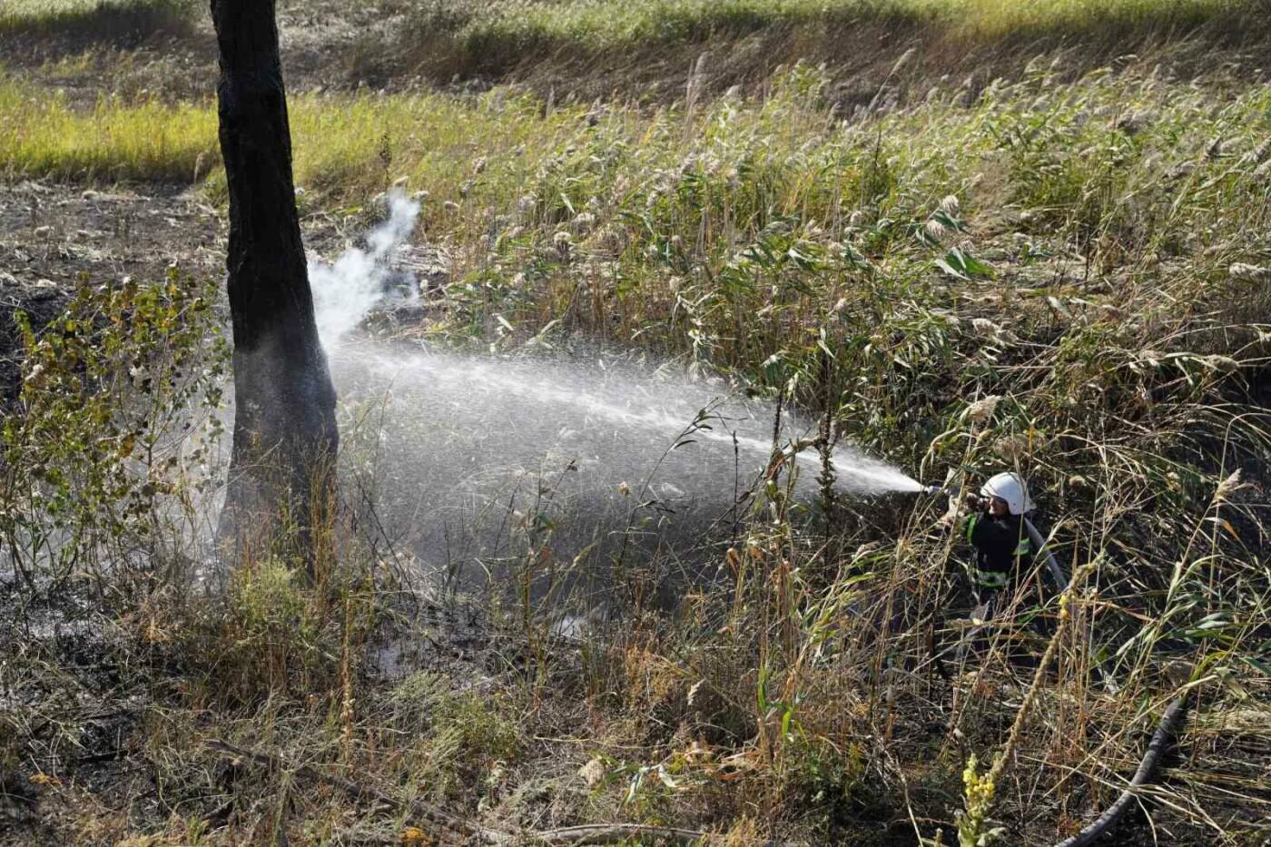 На Луганщине полностью потушили пожары в экосистемах, фото-1