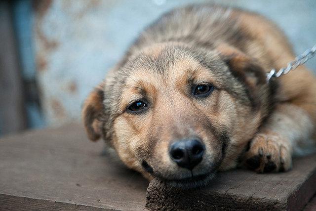 Жизнь недомашних животных Северодонецка: простые способы помочь бездомным собакам и кошкам пережить осень, фото-3